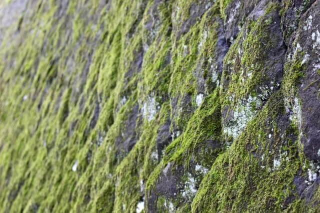 コンクリートに生えた苔を落とす方法とは