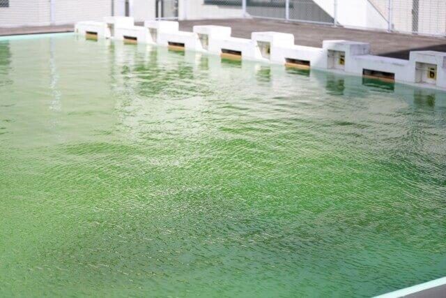 プールの掃除で気を付けたい菌